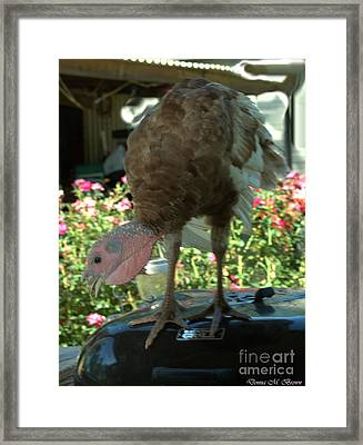 Grill Turkey Anyone Redneck Style Framed Print by Donna Brown