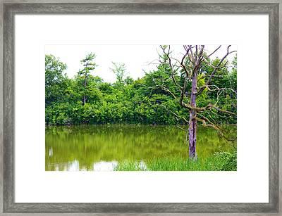 Grim Tree Framed Print