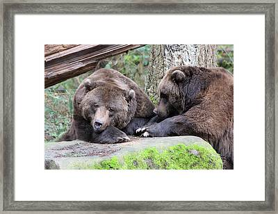 Framed Print featuring the photograph Grizzley - 0001 by S and S Photo