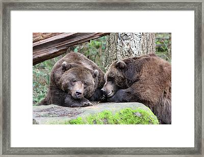 Framed Print featuring the photograph Grizzley - 0002 by S and S Photo