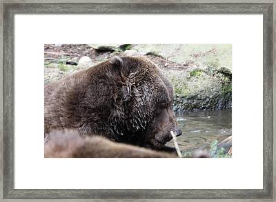Framed Print featuring the photograph Grizzley - 0003 by S and S Photo