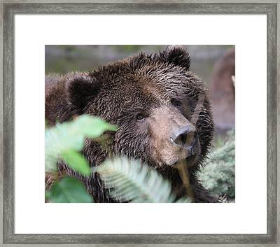 Framed Print featuring the photograph Grizzley - 0005 by S and S Photo