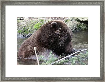 Framed Print featuring the photograph Grizzley - 0006 by S and S Photo