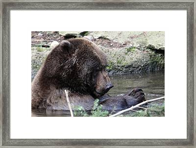 Framed Print featuring the photograph Grizzley - 0007 by S and S Photo