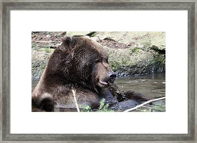 Framed Print featuring the photograph Grizzley - 0008 by S and S Photo