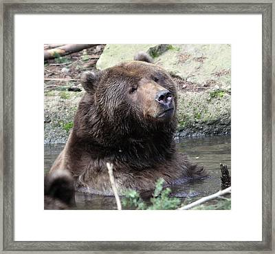 Framed Print featuring the photograph Grizzley - 0009 by S and S Photo