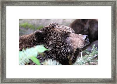 Framed Print featuring the photograph Grizzley - 0010 by S and S Photo