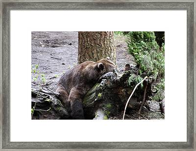 Framed Print featuring the photograph Grizzley - 0012 by S and S Photo