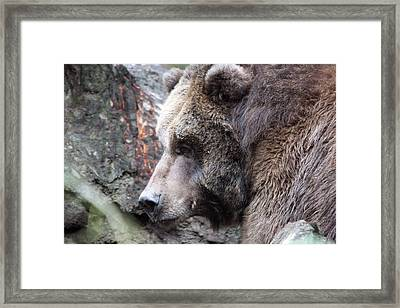 Framed Print featuring the photograph Grizzley - 0013 by S and S Photo