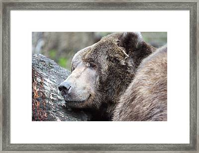 Framed Print featuring the photograph Grizzley - 0014 by S and S Photo