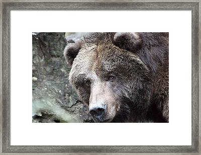 Framed Print featuring the photograph Grizzley - 0015 by S and S Photo