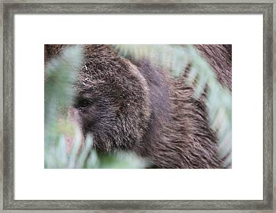 Framed Print featuring the photograph Grizzley - 0016 by S and S Photo