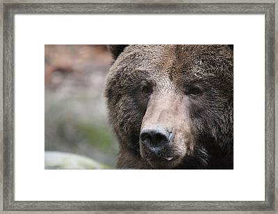 Framed Print featuring the photograph Grizzley - 0019 by S and S Photo