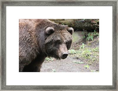 Framed Print featuring the photograph Grizzley - 0021 by S and S Photo