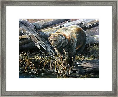 Grizzly Pond Framed Print by Scott Thompson