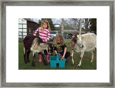 Groomers Framed Print by Lisa Tate