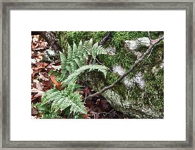 Ground Foliage Near Mountain Lake Framed Print
