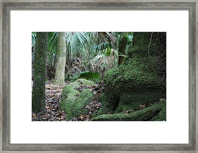 Grounded Framed Print by Sean Green