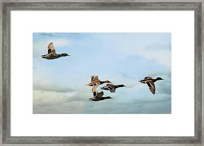 Group Flight Framed Print by Fraida Gutovich