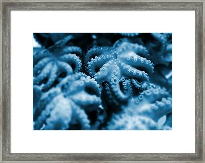 Group Of Octopuses Framed Print by Victor Habbick Visions