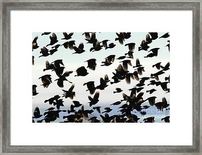 Group Photo Framed Print by Dennis Hammer