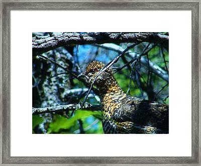 Grouse Framed Print by Sarah Buechler
