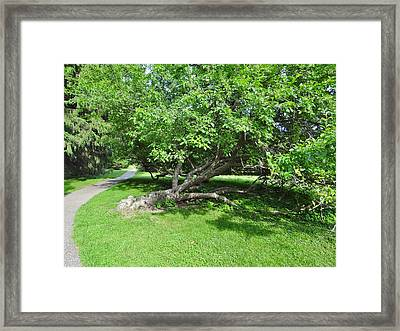 Grow Sideways Framed Print
