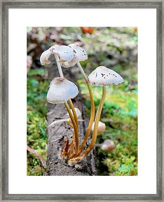Growen On A Log Framed Print by Jennifer Compton