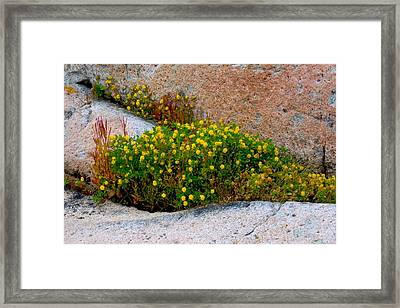 Framed Print featuring the photograph Growing In The Cracks by Brent L Ander