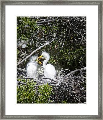 Growing Nestlings Framed Print by Phill Doherty