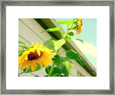 Growing Taller Framed Print by Amy Bradley