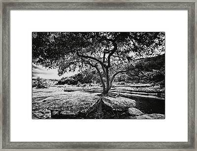 Grown Into The Rock Framed Print