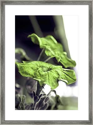 Growth Framed Print by Dax Ian