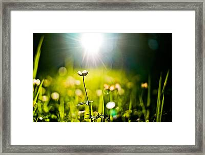 Growth Framed Print by Justin  Hill