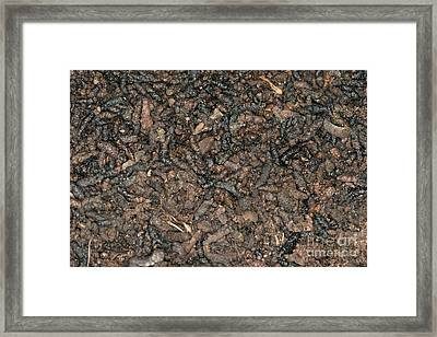 Guano Framed Print by Ted Kinsman