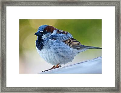 Guard Bird Framed Print by Colleen Coccia
