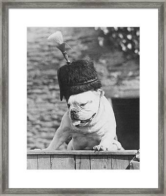Guard Dog Framed Print by Fox Photos