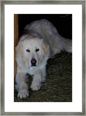 Framed Print featuring the photograph Guarding The Barn by Charles and Melisa Morrison