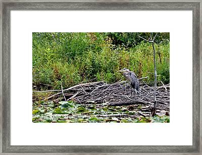 Guarding The Nest Framed Print by Larry Hutson Jr