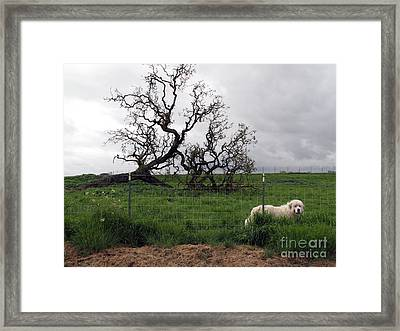 Framed Print featuring the photograph Guarding The Sheep by Leslie Hunziker