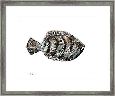 Gulf Flounder Framed Print by J Vincent Scarpace