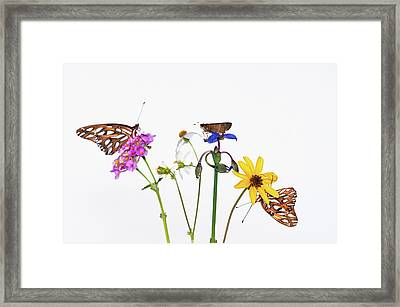 Gulf Fritillary And Brown Skipper Framed Print