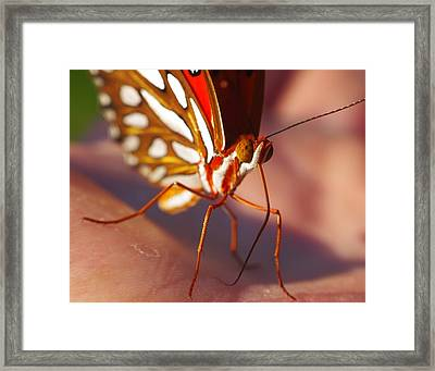 Gulf Fritillary Framed Print by Billy  Griffis Jr