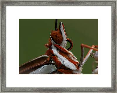 Framed Print featuring the photograph Gulf Fritillary Butterfly Portrait by Daniel Reed