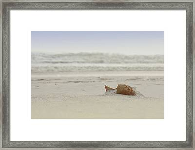 Gulf Shore Shell Framed Print