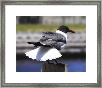 Gull Dance Framed Print by Linda Dunn