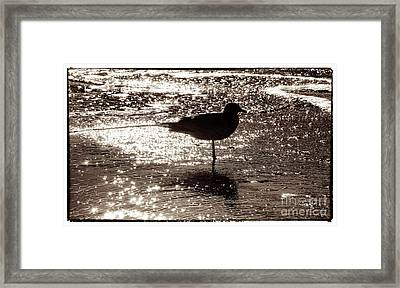 Framed Print featuring the photograph Gull In Silver Tidal Pool by Jim Moore