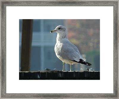 Gull Smiling Framed Print by Dennis Leatherman