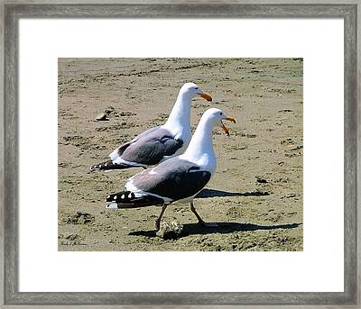Gull Talk Framed Print