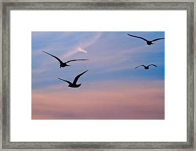 Gulls At Dusk Framed Print by Karol Livote